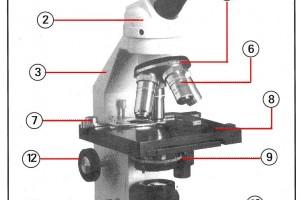 Строение микроскопа