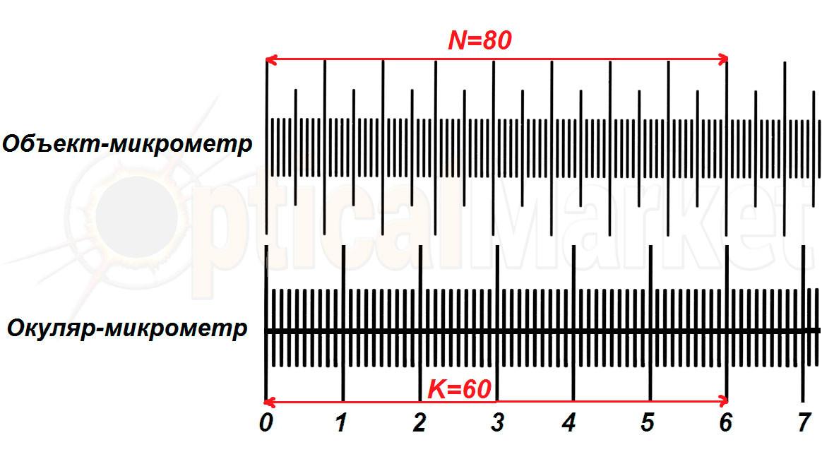 Окуляр-микрометр, объект-микрометр