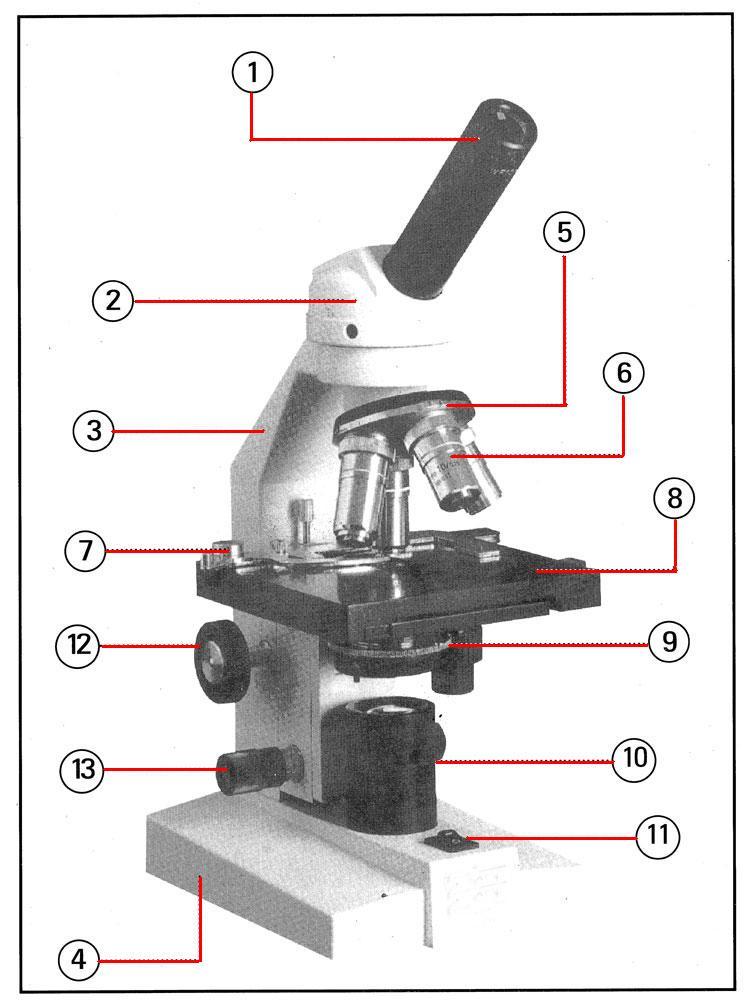 Microscope construction
