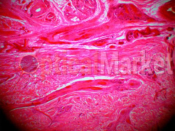 Тринокулярный микроскоп Delta Optical Genetic Pro Trino
